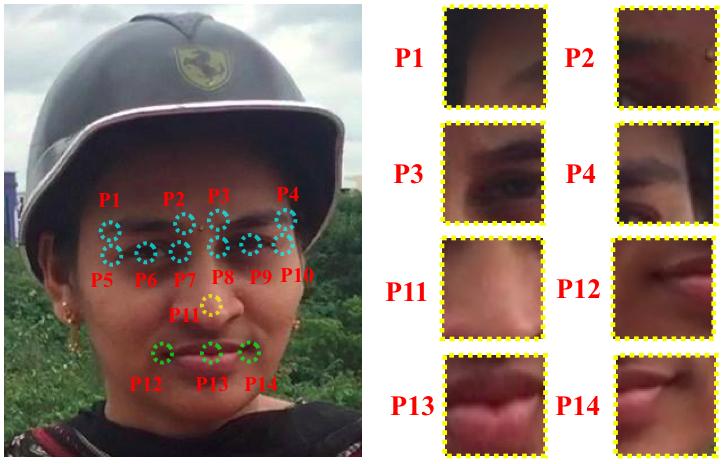 Fig-1n.jpg